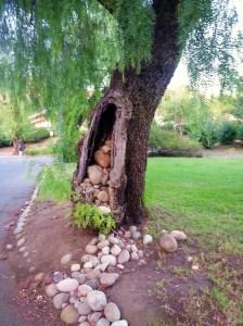 burden tree brandeis
