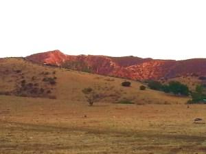 hills brandeis
