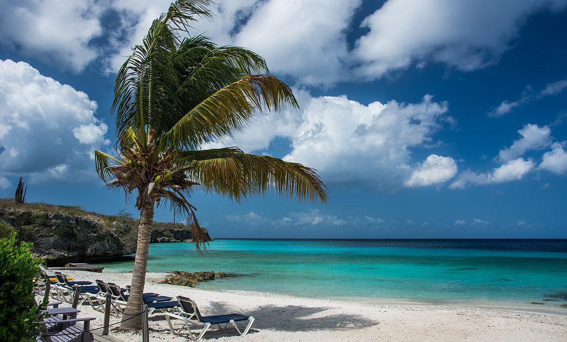 kahala beach palm tree
